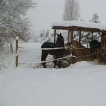 cavalli d'inverno